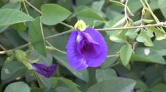 Blue Color Flower Plants 4K Background Stock Footage