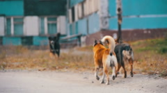 Stray Dogs on the Street. Slow Motion Stock Footage