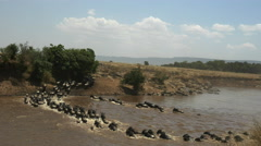 Wide view of wildebeest crossing the mara river in kenya Stock Footage