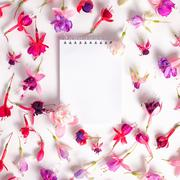 Flat lay of heads hybrid colorful fuchsia flowers and empty notebook on white Stock Photos