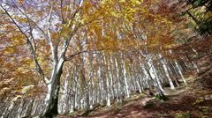 Trees seen from below in the Park of Foreste Casentinesi in Tuscany, Italy. Stock Footage