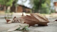 Dry leaf defoliation autumn Stock Footage