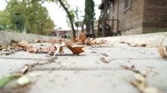 Defoliation leaves leaf fall leaves Stock Footage