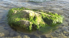 Remnant rocks overgrown with algae Stock Footage
