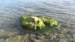 Remnant rocks overgrown with green algae Stock Footage