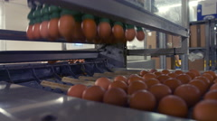 Eggs moving on the production line Stock Footage