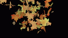 Colorful leaves spiral to the ground (animation on black background). Stock Footage