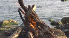 Bonfire Sea evening Arkistovideo