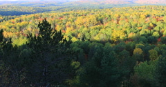 4K UltraHD Algonquin forest in fall Stock Footage