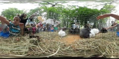360Vr Video Kids Have Fun at the Opole Zoo Rabbits Exhibition Parents and Kids Stock Footage
