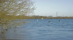 Background Chasewater resevoir water ripples with ducks swimming Stock Footage