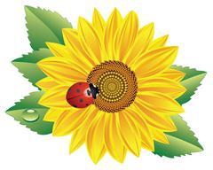 Vector sunflower Piirros
