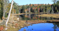 4K UltraHD Scene from Algonquin in autumn Stock Footage