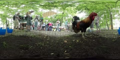 360Vr Video People at the Animal Exhibition Opole Zoo Roosters Are Walking in a Stock Footage