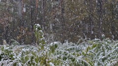 First snow in the forest. Stock Footage