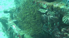 Tropical fish swim around a barrel sponge on a coral reef Stock Footage
