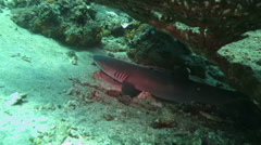 Shark in a sea near the shores Indonesia. Stock Footage