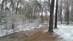 First snow in the forest. Road with puddles. Stock Footage