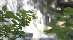 Waterfall in background with focus on tree in foreground 4k Stock Footage