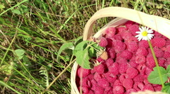 Fresh raspberries in a basket by hand on a background of green grass.  Stock Footage