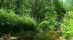 Little River in the array of green forest. Stock Footage