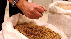 Brewer spilling grain from hand in sack at brewery factory Stock Footage