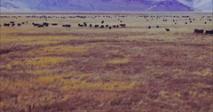 Aerial Drone View Of Cattle on ranch in Nevada Stock Footage
