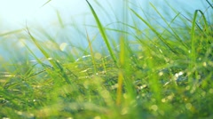 Grass with dew drops. Raindrops on the green grass with beautiful bokeh, blurred Stock Footage