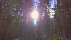 Beautiful pristine green forest trees flashing sunlight shimmering sun rays Stock Footage