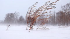 Sagebrush under Blizzard and strong snow windstorm in Siberian at winter Stock Footage
