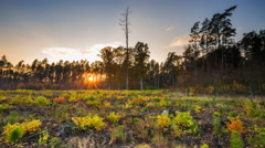 4k timelapse sunset in autumn forest. Beautiful european forest. Stock Footage