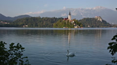 Swan floating on the lake in the early morning Bled, Slovenia Stock Footage