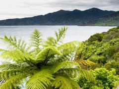 Fern tree Marlborough Sounds landscape New Zealand Stock Photos