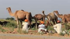 Men and herd camels attended the annual Pushkar Camel Mela. India Stock Footage