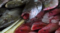 Counters with a bunch of fresh-caught ocean fish in ice. Closeup. Jimbaran Stock Footage
