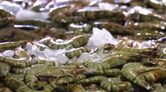 Counters with a bunch of fresh-caught ocean shrimps in ice. Closeup. Jimbaran Stock Footage
