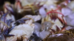 Counters with a bunch of fresh-caught ocean crabs in ice. Closeup. Jimbaran Stock Footage