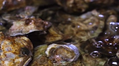 Bunch of fresh-caught ocean shellfish or oysters in water. Jimbaran Stock Footage