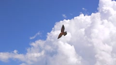 Kite in the beach. Eagle shape kite in the blue sky with white clouds. Nusa Dua Stock Footage