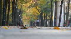 Alley with people on the autumn park at sunny day, Vienna, Austria Stock Footage