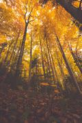 Colorful tree branches in sunny forest, autumn natural background Stock Photos