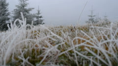 Grass with frost Stock Footage