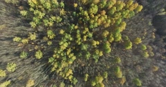 Autumn forest top view Stock Footage