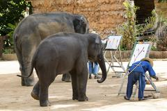 Mahout trains wild elephant to paint picture for tourism in thailand. Stock Photos