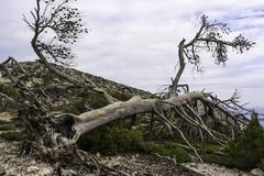 Burnt tree after a forest fire, Parnitha Greece Stock Photos