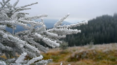 Christmas tree with frost. Stock Footage