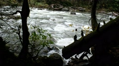 Snoqualmie River, Olallie State Park, Washington Stock Footage