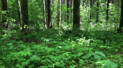 Mixed forest. Smooth panoramic view. Stock Footage