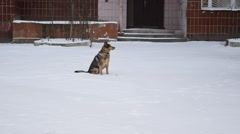 Dog sits on snow in winter Stock Footage