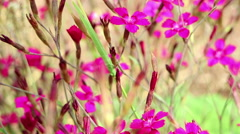 Beautiful purple flowers. Stock Footage